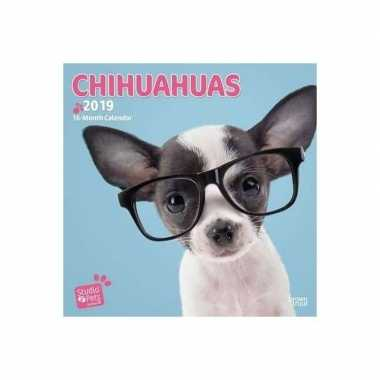 Chihuahua kalender 2019