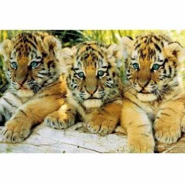 Fotografische poster tijger welpjes