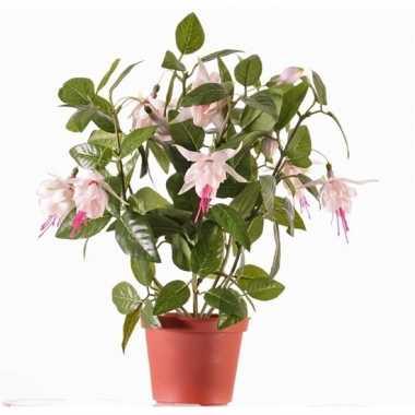 Fuchsia plant in potje 30 cm roze