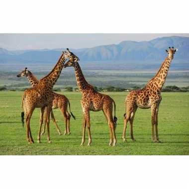 Giraffe placemats 3d 28 x 44 cm