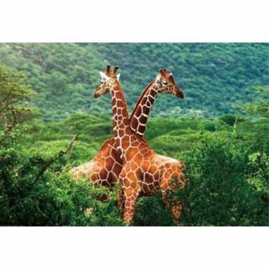 Giraffe placemats 3d