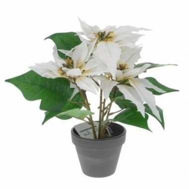 Kunstplanten witte poinsettia bloem met pot 30 cm