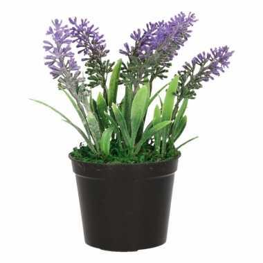 Lavendel planten paars