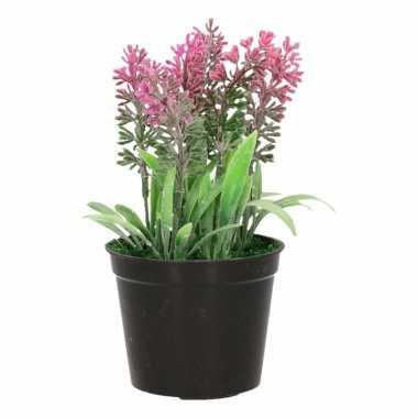 Lavendel planten roze
