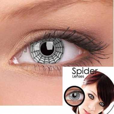 Lenzen spiders