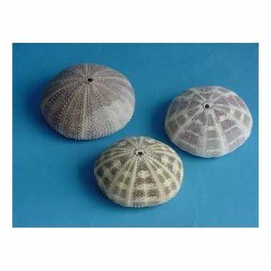 Mini zeeappeltjes 8 cm