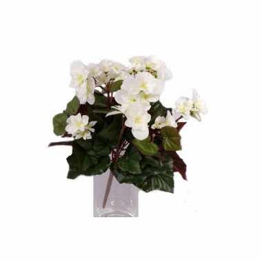 Namaak witte begonia plant 30 cm