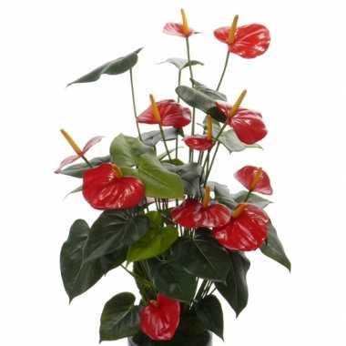 Nep anthurium plant rood 80 cm