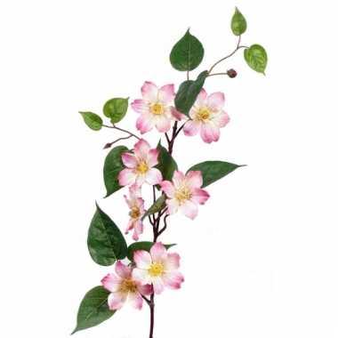 Nep clematis roze 80 cm