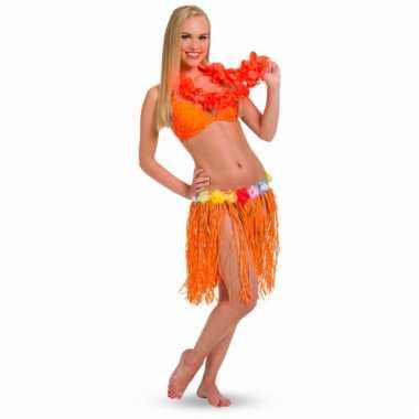 Oranje hawaii rok
