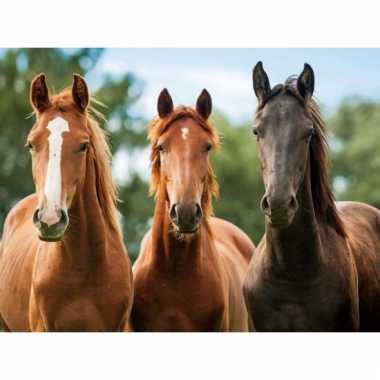 Paarden placemats 3d
