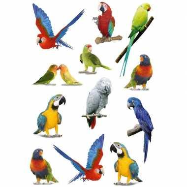 Papegaaien vogels met zacht kunststof stickervel met 36 stickers