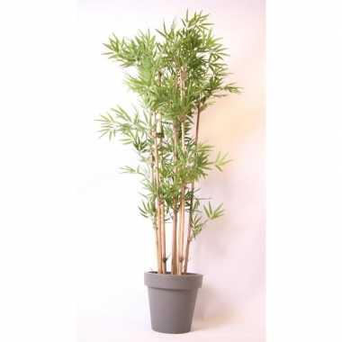 Tropische bamboe boom in grijze pot 190 cm