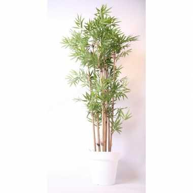 Tropische bamboe boom in witte pot 190 cm