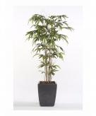 Bamboe promo plant in pot 150 cm
