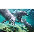 Dolfijnen maxi poster 61 x 92 cm