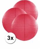 Fuchsia lampionnen 50 cm 3 stuks