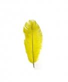 Gele veer 35 cm zwarte piet