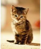 Katten poezen mini poster 40 x 50 cm