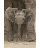 Kinderkamer olifant poster 61 x 91 cm