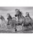 Kinderkamer paard poster 61 x 91 cm
