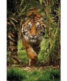 Kinderkamer tijger poster 61 x 91 cm