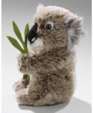 Knuffel koalabeer 37 cm