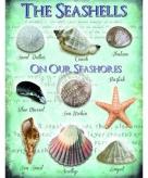 Metalen plaatje met zeeschelpen