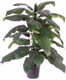 Spathiphyllum kantoorplant 120 cm