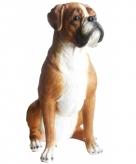 Tuinbeeld boxer hond 47 cm