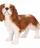 Tuinbeeld king charles hond 43 x 41 x 15 cm