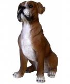 Tuinbeeldje boxer hond 25 x 12 x 20 cm