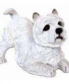Tuinbeeldje west highland terrier 36 cm