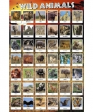 Wilde dieren maxi poster 61 x 91 cm